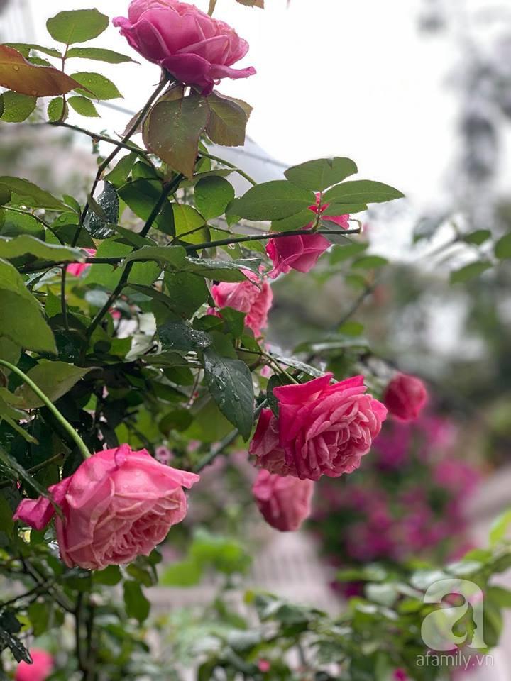 Cuộc sống bình yên của gia đình nhỏ trong ngôi nhà phủ kín hoa hồng ở Hà Nội - Hình 26