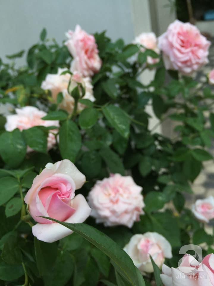 Cuộc sống bình yên của gia đình nhỏ trong ngôi nhà phủ kín hoa hồng ở Hà Nội - Hình 18