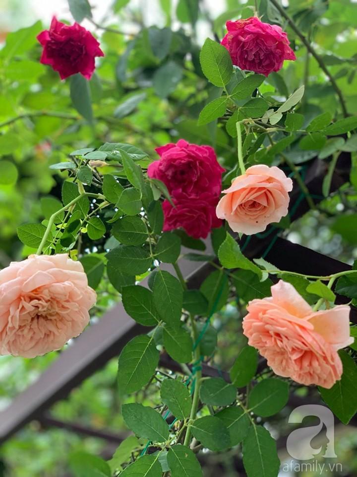 Cuộc sống bình yên của gia đình nhỏ trong ngôi nhà phủ kín hoa hồng ở Hà Nội - Hình 11