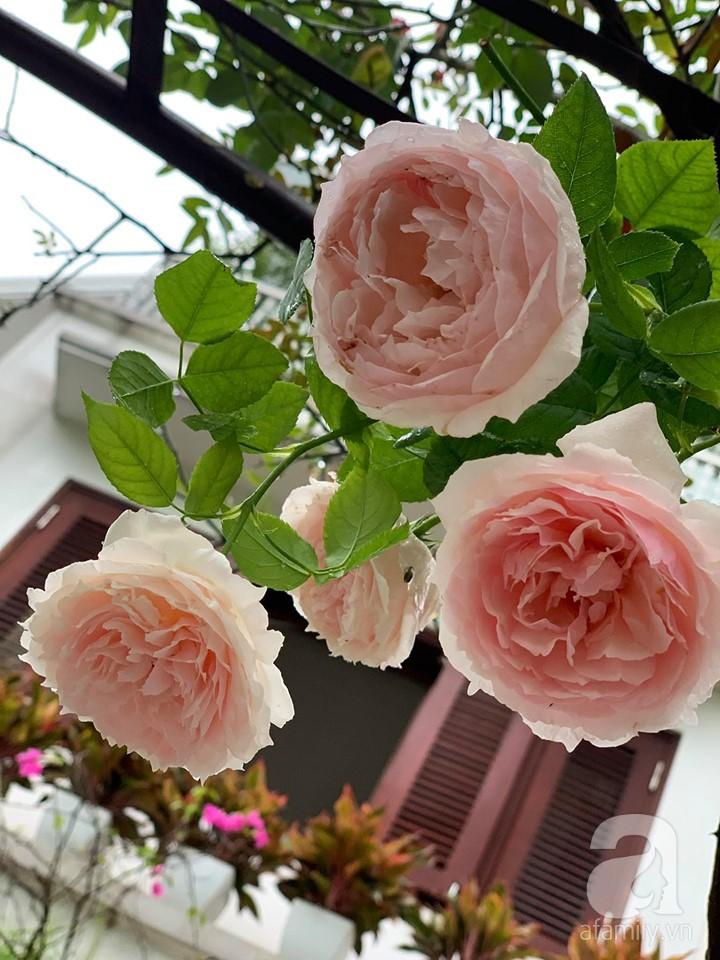 Cuộc sống bình yên của gia đình nhỏ trong ngôi nhà phủ kín hoa hồng ở Hà Nội - Hình 12
