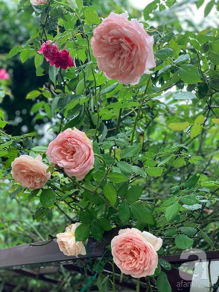 Cuộc sống bình yên của gia đình nhỏ trong ngôi nhà phủ kín hoa hồng ở Hà Nội - Hình 6
