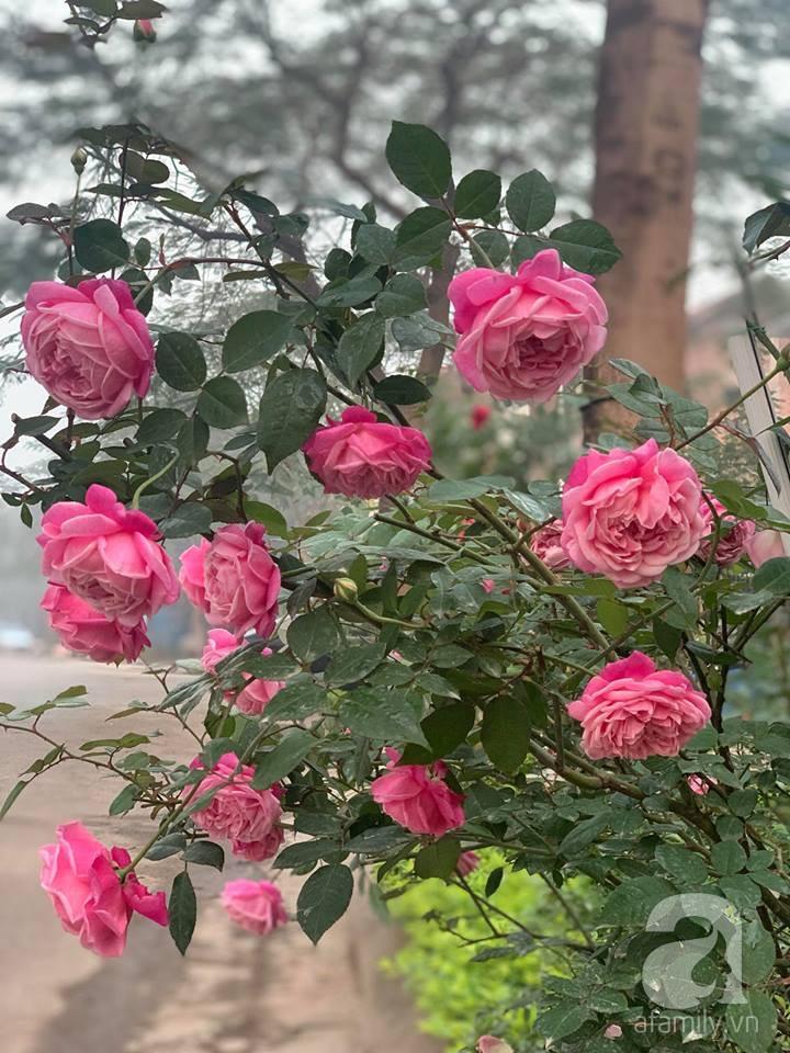 Cuộc sống bình yên của gia đình nhỏ trong ngôi nhà phủ kín hoa hồng ở Hà Nội - Hình 29