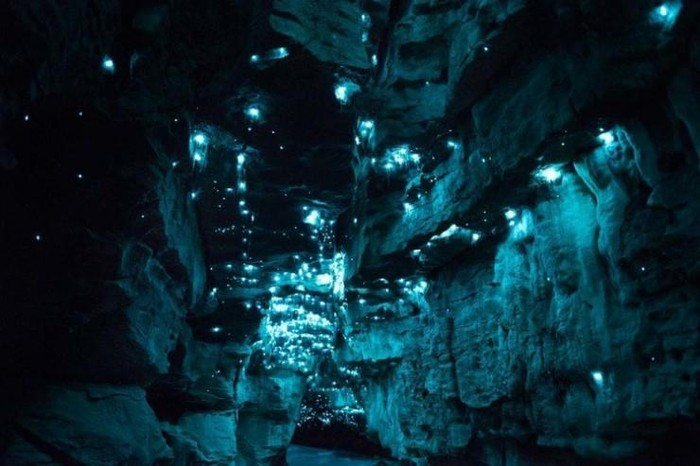 Hang động kỳ ảo nhất New Zealand khiến du khách trố mắt - Hình 3