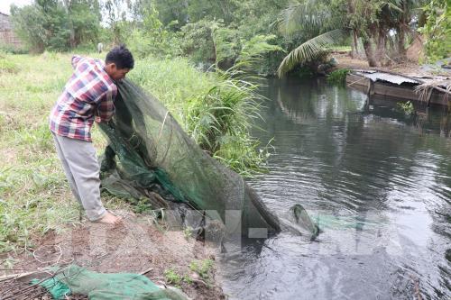 Trang trại nuôi vịt xả thải gây ô nhiễm nguồn nước - Hình 1