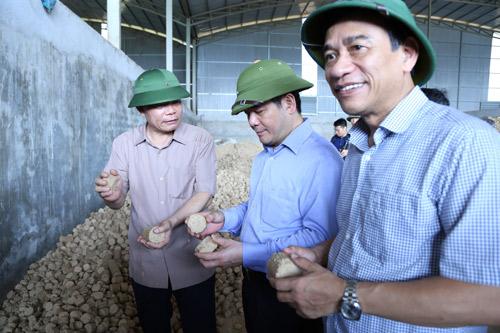 Đánh bạc vào nuôi trâu bò hay là lúc cải tổ của ngành chăn nuôi? - Hình 1