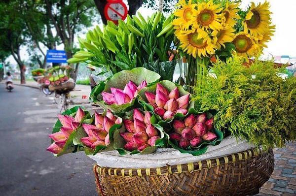 Cách phân biệt quỳ và sen chuẩn không trượt phát nào, thách thức dân bán hoa lừa đảo - Hình 1