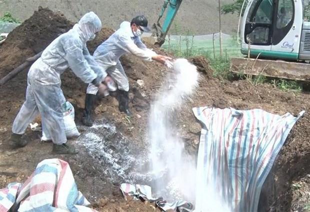 Thực hư trại lợn khủng 20.000 con bị dịch tả lợn châu Phi ở Đồng Nai - Hình 1