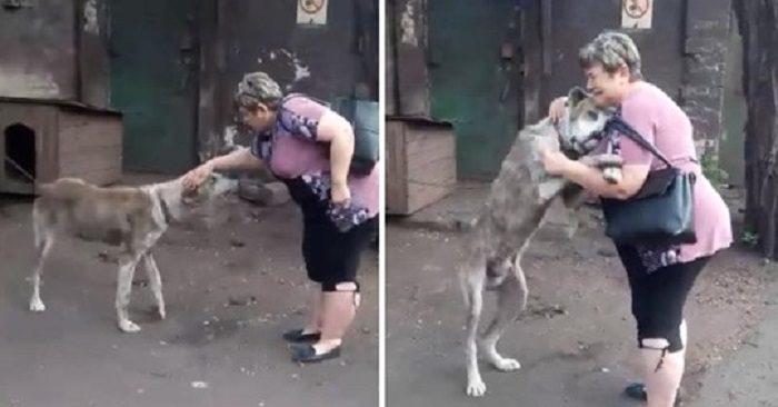 Hội ngộ kỳ tích, chú chó gặp lại chủ nhân sau 2 năm thất lạc - Hình 1