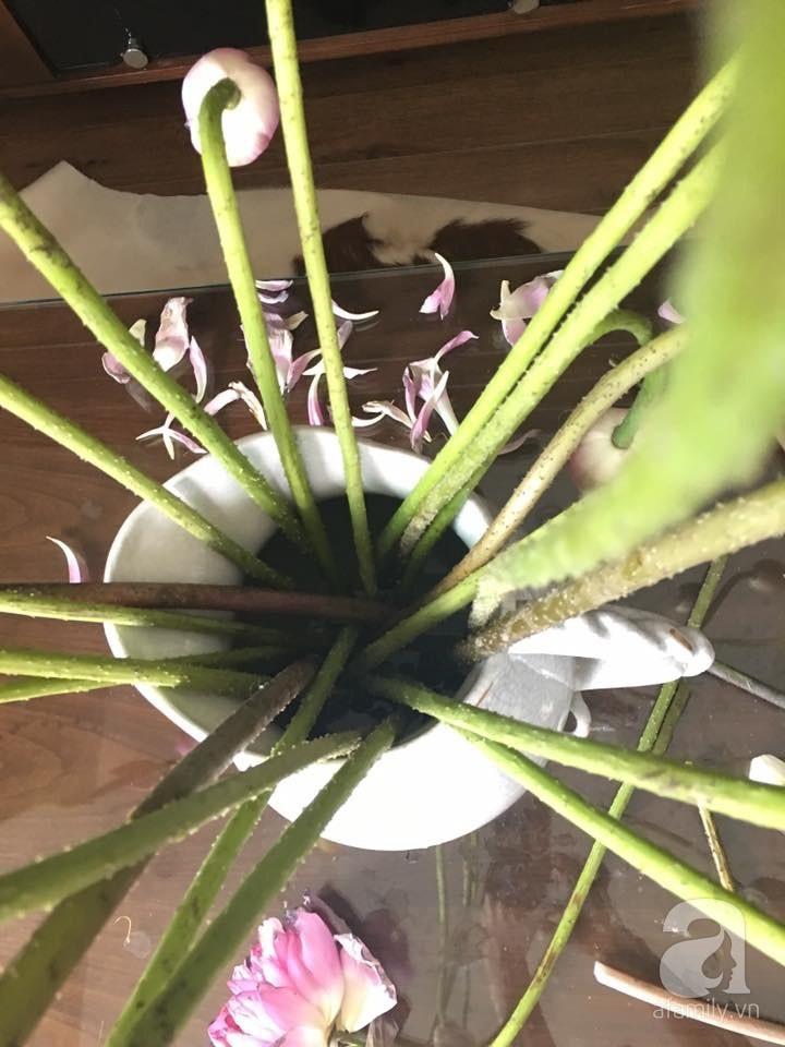 Níu giữ hương mùa hạ với những bình hoa sen đẹp dịu dàng trong tổ ấm của 3 người phụ nữ đảm tại Hà Nội - Hình 15