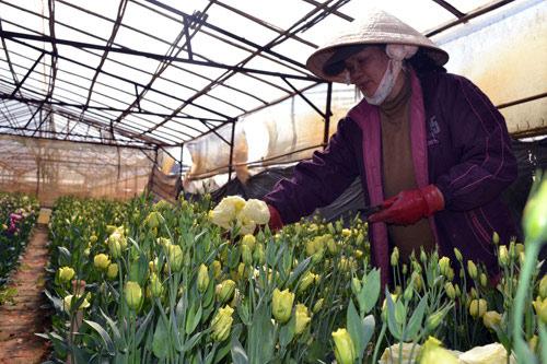 10 năm phát triển giống cây - con mới, vẫn nhập 80% giống hoa, rau - Hình 1