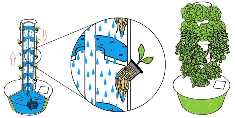 Sân thượng xanh um nhờ rừng rau thẳng đứng - Hình 2