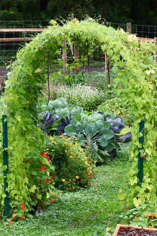 Vợ chồng trẻ cùng hai con say mê công việc làm vườn, phủ xanh 2,75 hecta đất trống - Hình 22