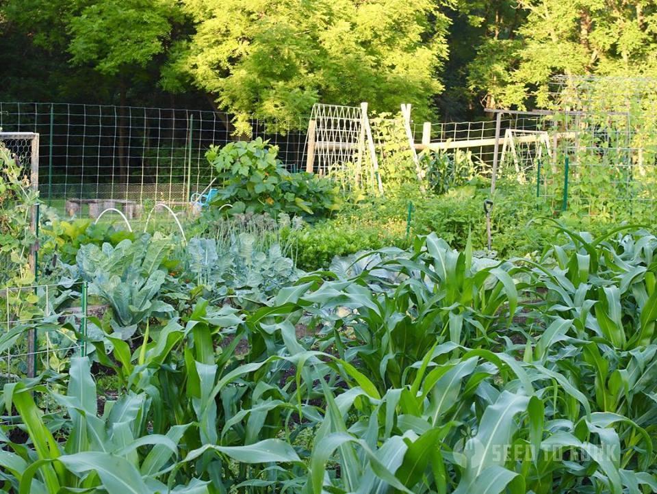 Vợ chồng trẻ cùng hai con say mê công việc làm vườn, phủ xanh 2,75 hecta đất trống - Hình 10