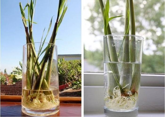 Mách bạn các loại cây gia vị có thể trồng tại nhà - Hình 3