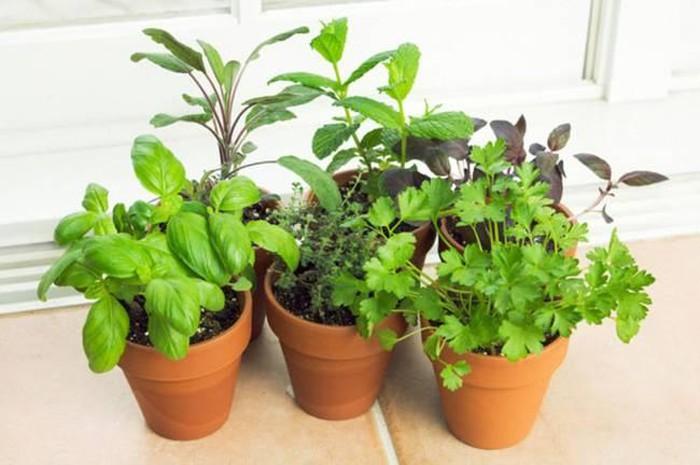 Mách bạn các loại cây gia vị có thể trồng tại nhà - Hình 1