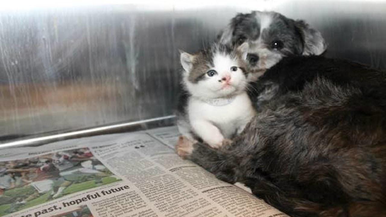 Câu chuyện về bản năng làm mẹ của cô chó hoang nhận mèo làm con nuôi chạm tới trái tim tất cả mọi người - Hình 1