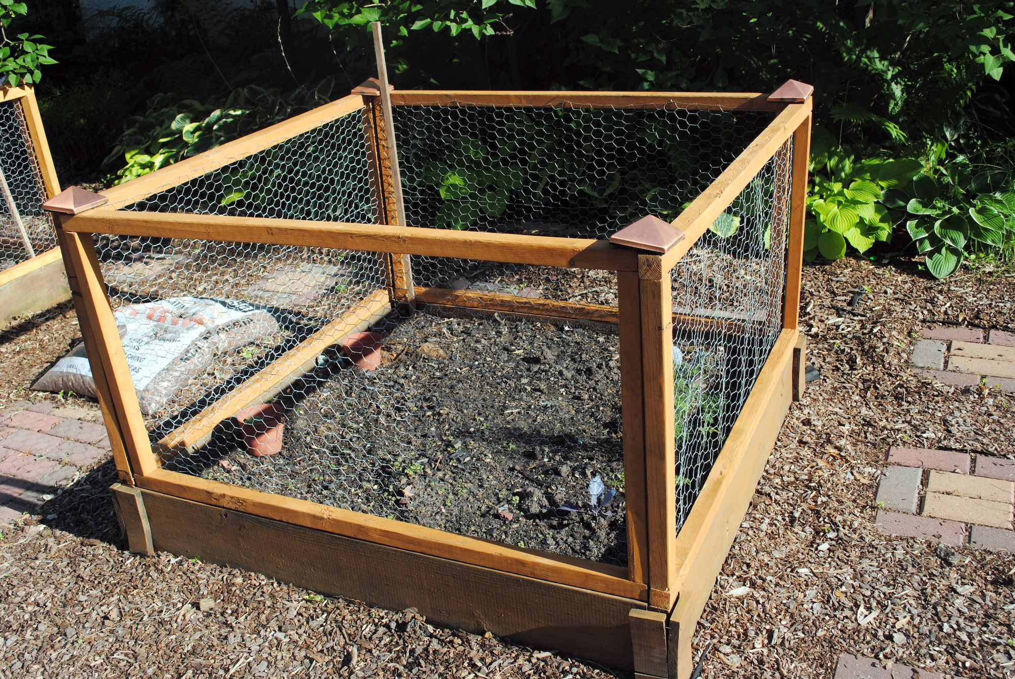 Dù không có nhiều kinh nghiệm trong trồng rau thì với 10 lưu ý dưới đây bạn vẫn có thể sở hữu một vườn rau tươi tốt - Hình 7