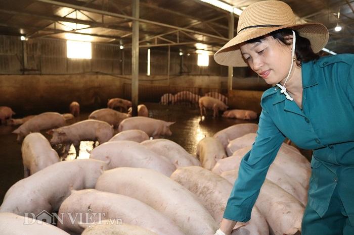 Lai Châu: Nữ tỷ phú vượt qua nỗi ám ảnh dịch tả lợn châu Phi - Hình 1