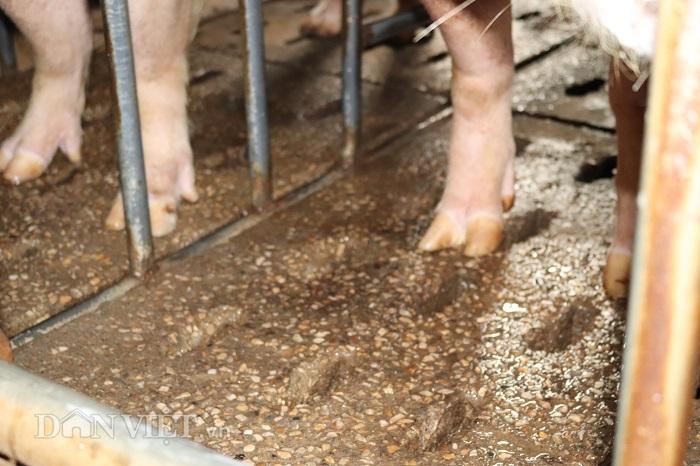 Lai Châu: Nữ tỷ phú vượt qua nỗi ám ảnh dịch tả lợn châu Phi - Hình 2