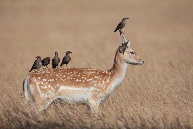 Chết cười những shipper bất đắc dĩ trong thế giới động vật - Hình 2