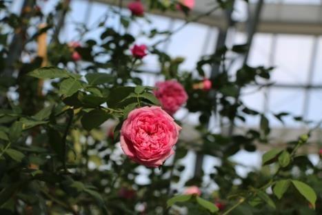 Khám phá khu vườn kỳ hoa dị thảo trên đảo kỷ lục tại Nha Trang - Hình 2