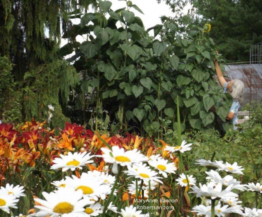 Khu vườn ngọt ngào đầy hoa lá và cây trái của ông bà cụ quyết rời căn hộ thành phố về quê sinh sống - Hình 9