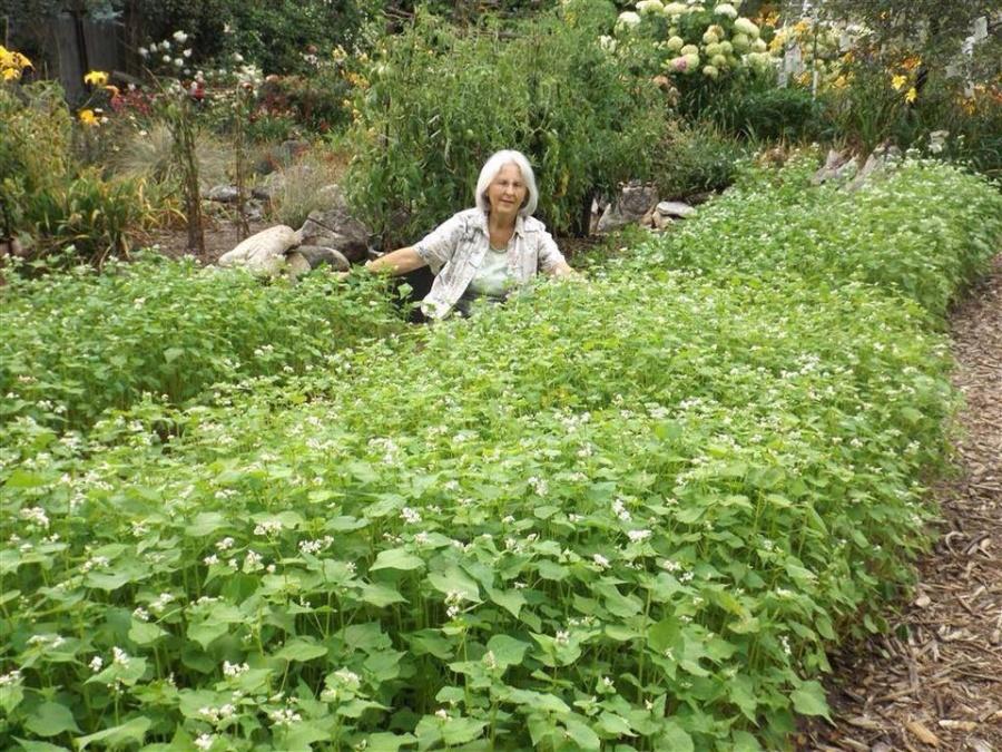 Khu vườn ngọt ngào đầy hoa lá và cây trái của ông bà cụ quyết rời căn hộ thành phố về quê sinh sống - Hình 24