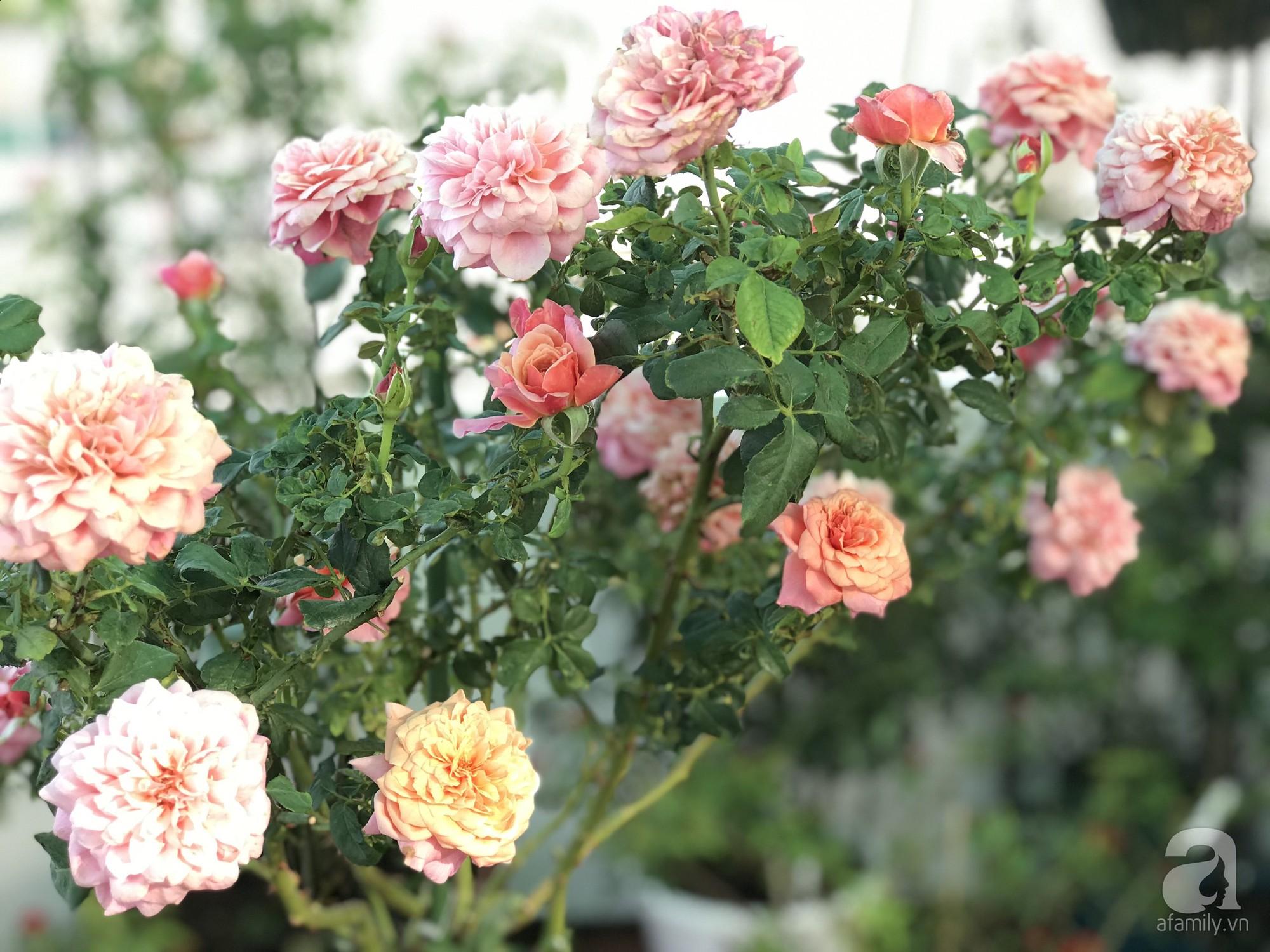 Sân thượng hoa hồng đẹp mộng mơ như trong cổ tích của cô giáo dạy Văn ở thành phố biển Nha Trang - Hình 4