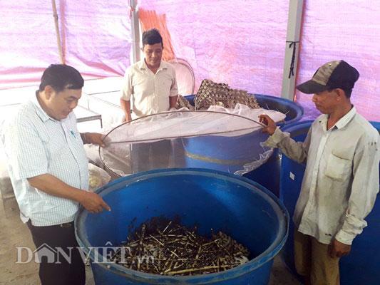 Anh nông dân Sài thành làm giàu từ trang trại nuôi loài kêu rỉ rả - Hình 1
