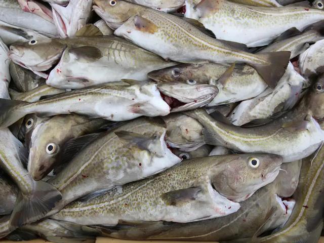 Biến đổi khí hậu có thể khiến thủy ngân độc hại tích tụ trong hải sản - Hình 1
