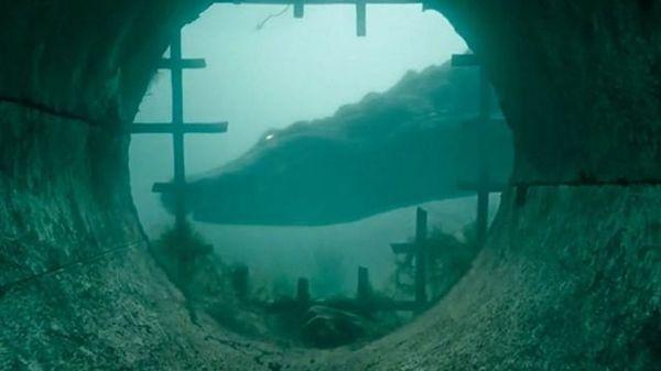 Review Crawl: Cuộc chiến sống còn với cá sấu, ăn đứt nhiều phim kinh dị - Hình 1