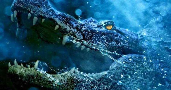 Review Crawl: Cuộc chiến sống còn với cá sấu, ăn đứt nhiều phim kinh dị - Hình 4