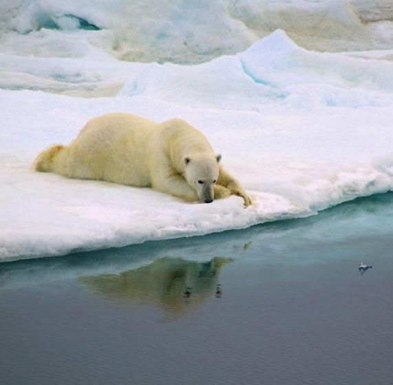 Những bức ảnh độc chứng minh động vật cũng biết... suy tư - Hình 7