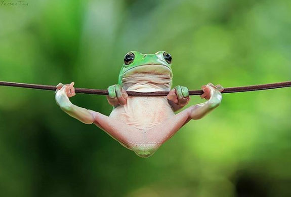 Những bức ảnh độc chứng minh động vật cũng biết... suy tư - Hình 4