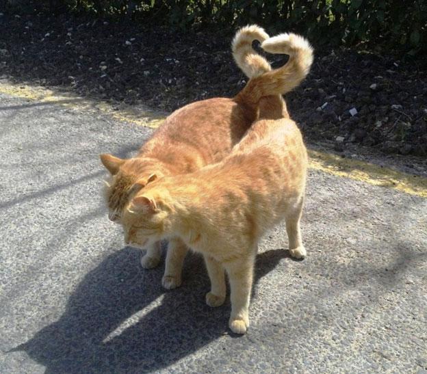 Những bức ảnh độc chứng minh động vật cũng biết... suy tư - Hình 8