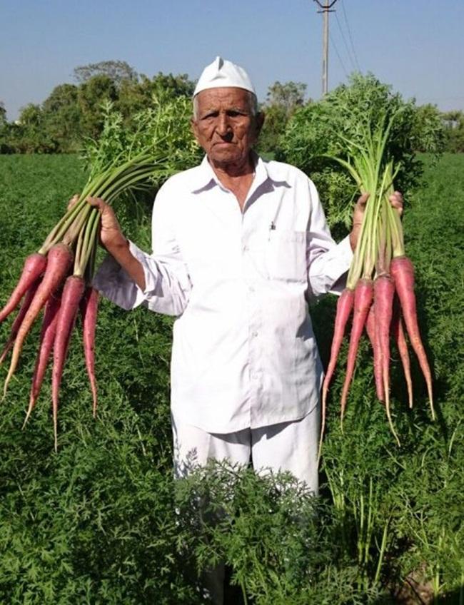 Liều trồng thứ trước chỉ cho gia súc ăn, cụ ông hốt trăm triệu - Hình 1