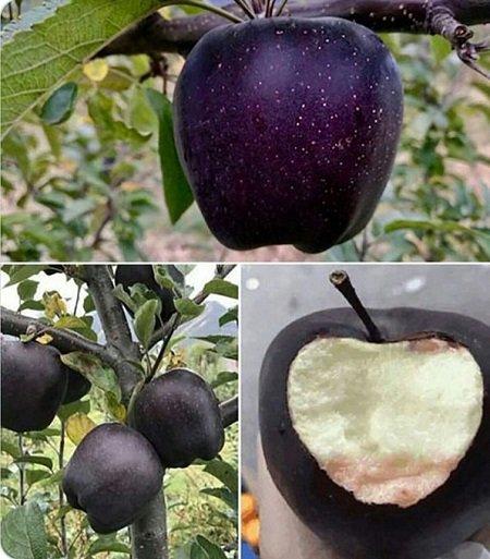 Giới nhiều tiền chi nửa triệu bạc mua một trái táo đen như than - Hình 2