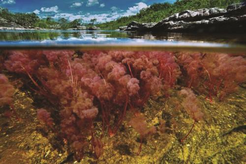 Độc đáo dòng sông 5 màu ở Colombia - Hình 8