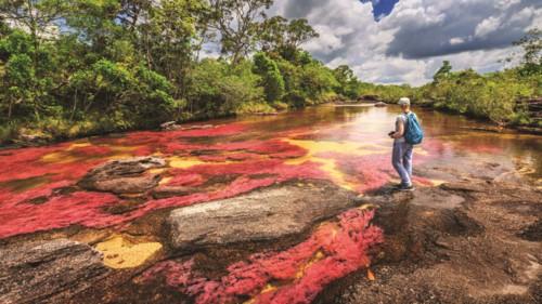 Độc đáo dòng sông 5 màu ở Colombia - Hình 4