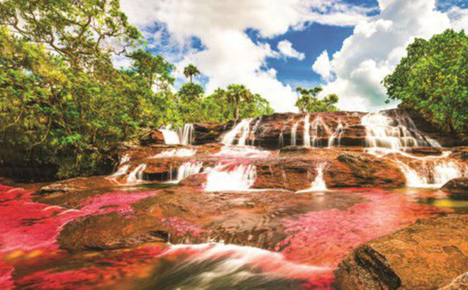Độc đáo dòng sông 5 màu ở Colombia - Hình 1