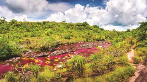 Độc đáo dòng sông 5 màu ở Colombia - Hình 2
