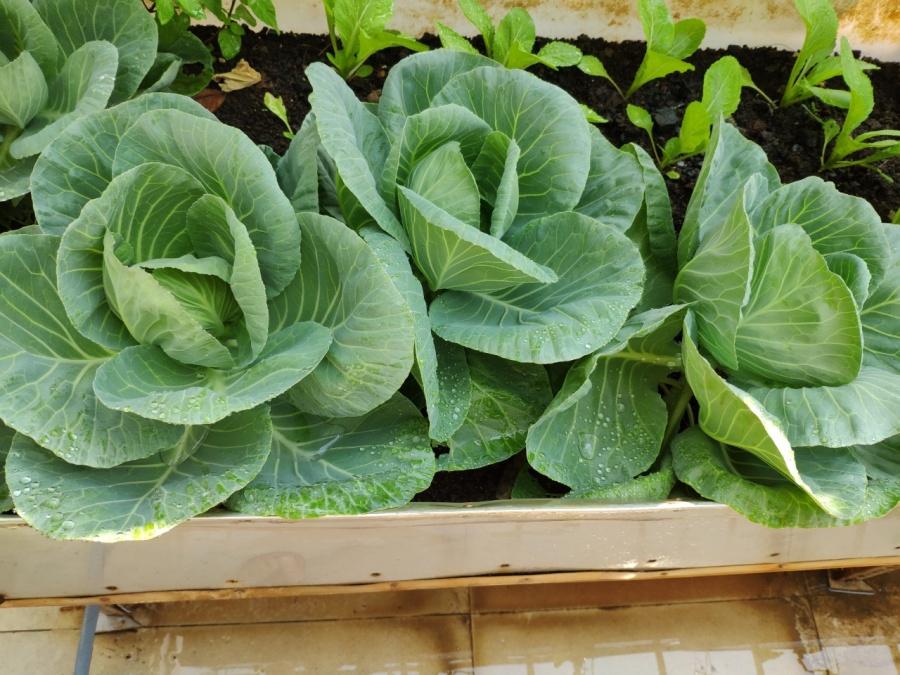 Khu vườn trên cao đủ loại rau xanh quả sạch bà ngoại ngày đêm chăm bón cho cháu thưởng thức ở Sài Gòn - Hình 16