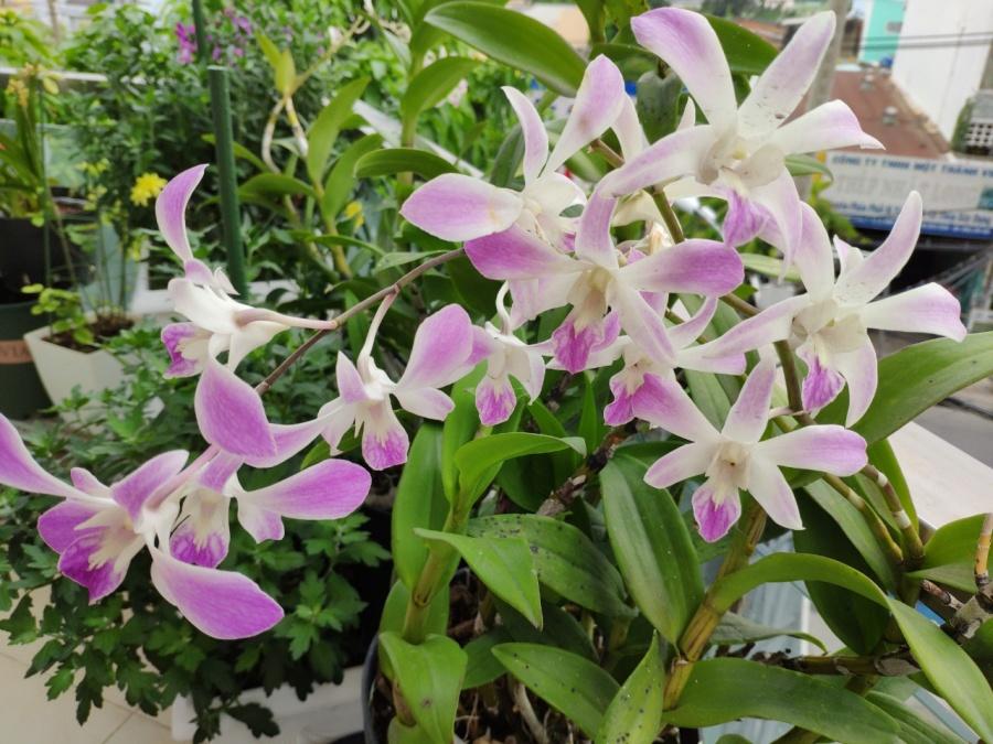 Khu vườn trên cao đủ loại rau xanh quả sạch bà ngoại ngày đêm chăm bón cho cháu thưởng thức ở Sài Gòn - Hình 33
