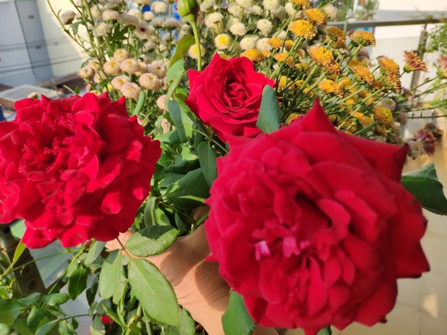 Khu vườn trên cao đủ loại rau xanh quả sạch bà ngoại ngày đêm chăm bón cho cháu thưởng thức ở Sài Gòn - Hình 26