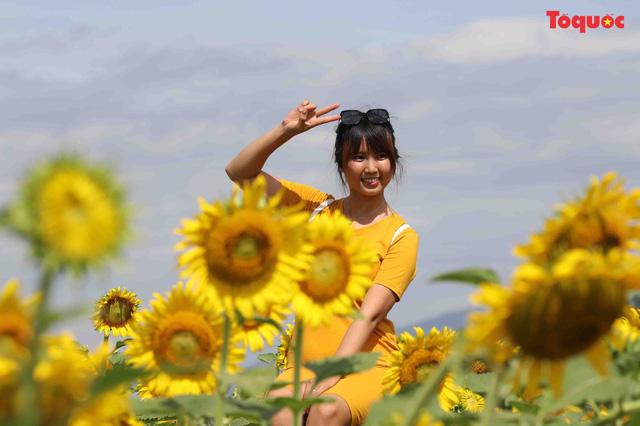 Giới trẻ hào hứng check-in cánh đồng hoa hướng dương ở Gò Nổi - Hình 7