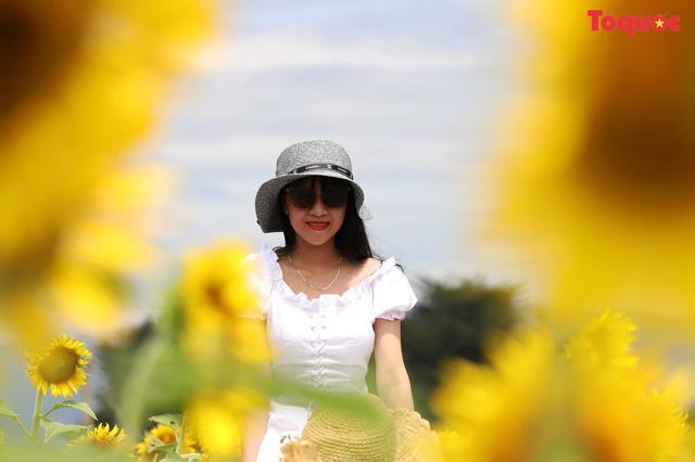 Giới trẻ hào hứng check-in cánh đồng hoa hướng dương ở Gò Nổi - Hình 15