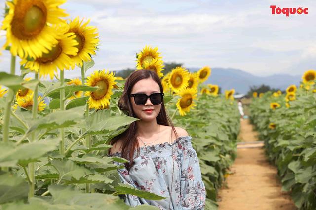 Giới trẻ hào hứng check-in cánh đồng hoa hướng dương ở Gò Nổi - Hình 11