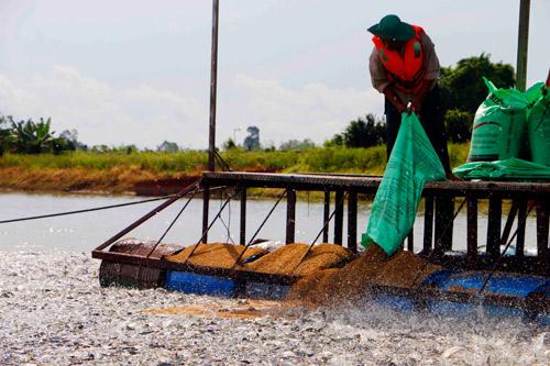 Cá tra Việt (bài 2): Trung Quốc tự nuôi, hết thời một mình, một chợ - Hình 2