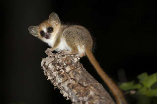 Madagascar - Thiên đường của những loài động vật kỳ lạ - Hình 10