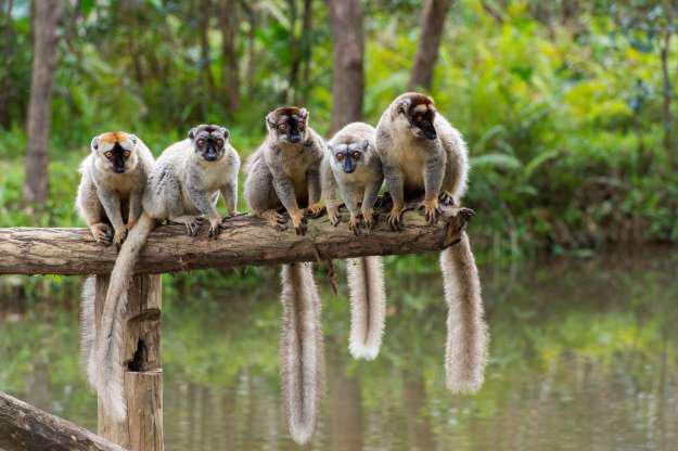 Madagascar - Thiên đường của những loài động vật kỳ lạ - Hình 12